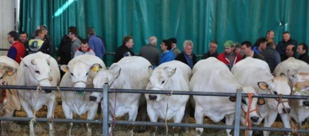 Il mercato agroalimetare all'ingrosso di Ronchi frazione di Cuneo.Fonte:http://www.lastampa.it/