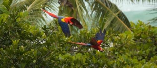 Il polmone verde della Costa Rica. (fonte:web)