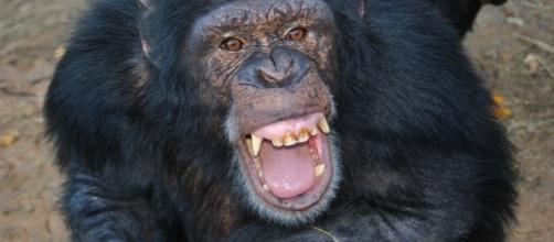 When panicked, human behavior can resemble chimp behavior https://www.flickr.com.