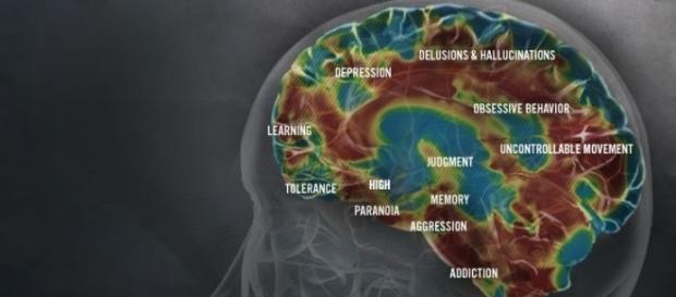 The effects of metamphetamine on the brain (http://www.methproject.org/answers/what-does-meth-do-to-your-brain.html#Brain-Damage)