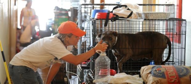 Animal Shelters preparing for Hurricane Irma. Photo Source: Wikimedia
