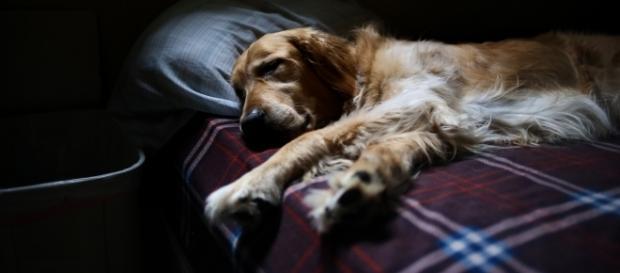 Study says having a dog in your bedroom helps sleep | Image Credit: Pixabay