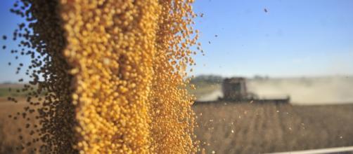 Produção da soja subiu 19,6%, estima a pesquisa