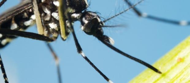 Casi di Chikungunya ad Anzio, stop alle donazioni sangue: ecco ... - improntaunika.it