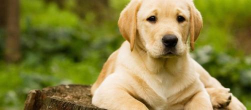 Experiência confirma que cachorros conseguem se reconhecer