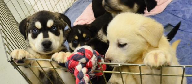 All patients sickened by the outbreak came in contact with puppies sold at Petland- James Brooks/ Flickr