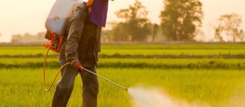 L'herbicide le plus utilisé au monde pourrait entrainer un cancer. - economiematin.fr