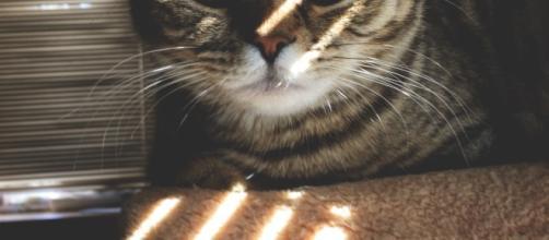 Os gatos nos pequenos espaços urbanos