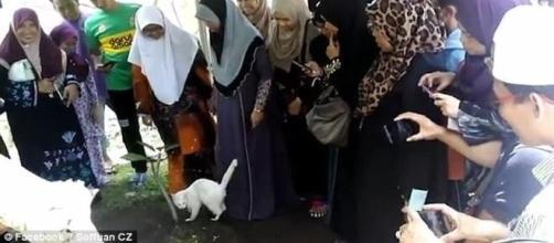 Felino desconhecido invadiu funeral e demonstrou estranho comportamento (Soffuan CZ)