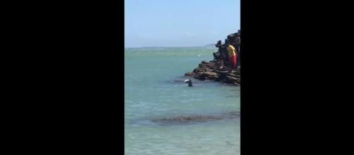 No vídeo, é possível verificar a barbatana do tubarão (Foto: Captura de vídeo)