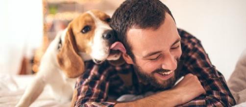 Os cães são capazes de fazer qualquer coisa para chamar a atenção