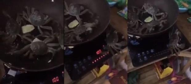 Caranguejo escapa de panela fervendo e desliga fogão (Fotos: Captura de vídeo)