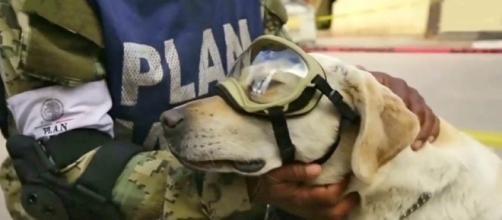 Frida the rescue dog has gone viral on social media as the Mexico Navy's best search and rescue dog [Image: YouTube/The Star Online]
