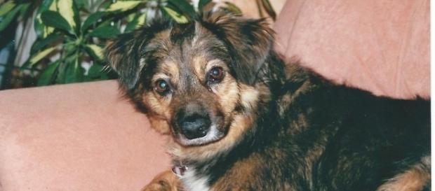 """Tier-Drama: Hund """"Yashin"""" stirbt nach Tritt durch Kölner ... - Foto: Sigrid Schulz"""