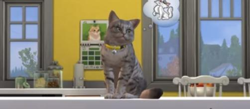 'The Sims 4: Cats & Dogs' listing for Xbox One and PS4 was accidentally leaked by a trusted retailer. The Sims/YouTube