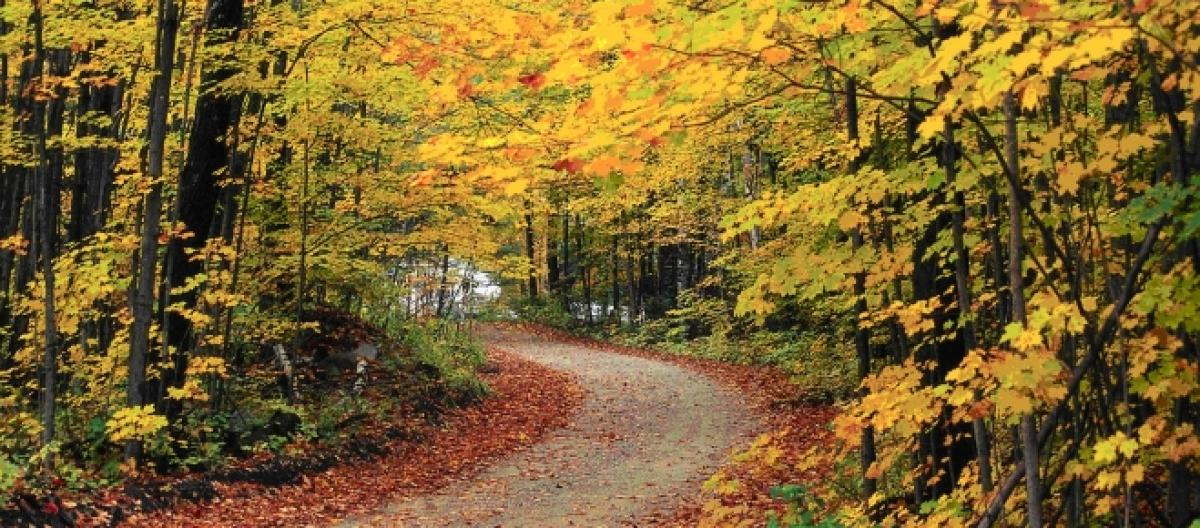 Fall is here: Here are some fun facts
