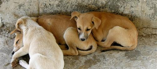 Dogs of Elephanta Island | Unfortunate overpopulation of dog… | Flickr Flickr