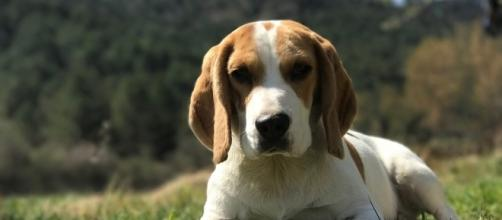 Pet, Window, Animals, Animal, Pets - (Image Credit: Animal Pets/Pixabay.com)