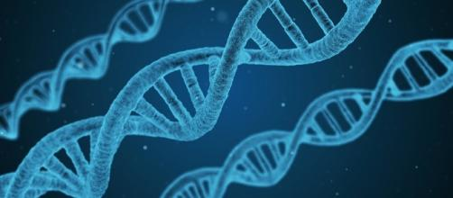 A new study suggested that genetics play an important role in autism/Photo via qimono/Pixabay