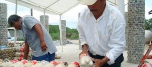 El modelo de construcción de VIEM propone dar un hogar temporal para las personas que perdieron su casa tras el sismo en México.