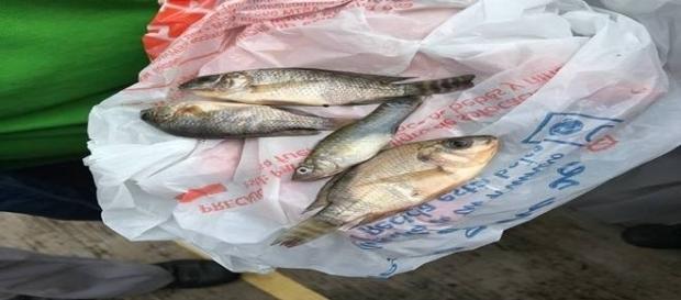 Peixes caíram do céu na cidade de Tampico (Foto: Protección Civil Tamaulipas)