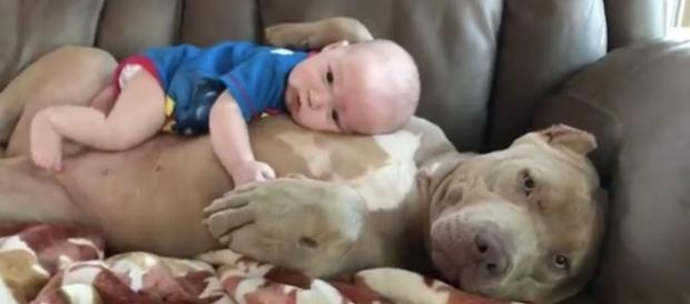Eduque seu cão e tenha um amigo fiel (foto: Hiper Fm)