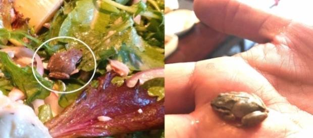 Becky Garfinkel achou um sapo em sua salada e resolveu mantê-lo como animal de estimação