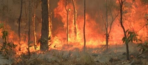 Scene of a bushfire (Credit – 80 treading 24 – wikimediacommons)