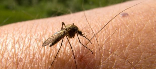 Malaria in Italia, primo caso autoctono dopo 30 anni