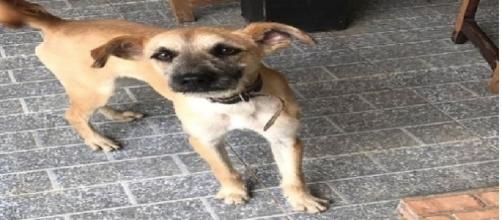 Billy é o novo cachorrinho de Fabíola Reipert