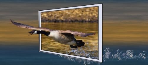 Las aves han estado presentes como símbolo desde el inicio de la cultura humana