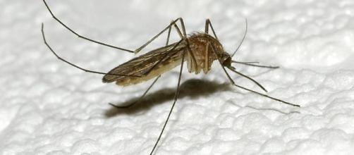 """Mosquito Day"""", la malaria esiste ed è ancora mortale - La Stampa - lastampa.it"""