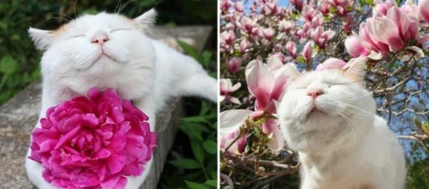 O costume de presentear com flores é muito antigo