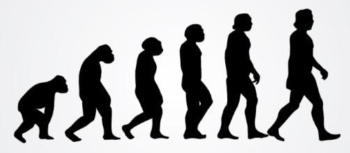 Human Evolution   Vector Open Stock   Flickr