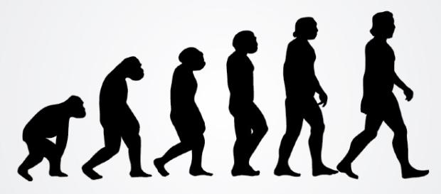 Human Evolution | Vector Open Stock | Flickr