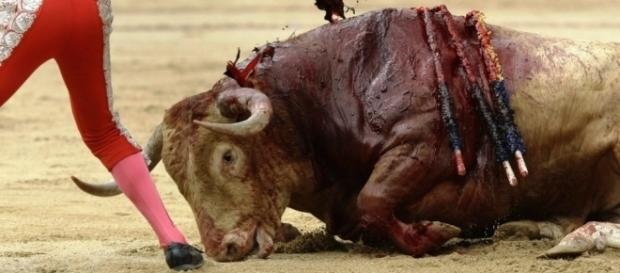La corrida vista con gli occhi del toro.