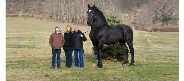 O tamanho desses animais é encantador
