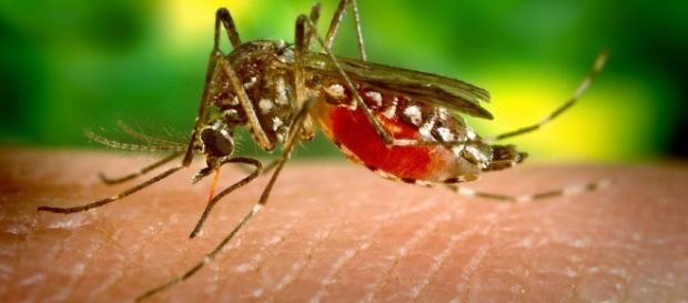 Zika virus. Treating cancer. Image via Pixabay.