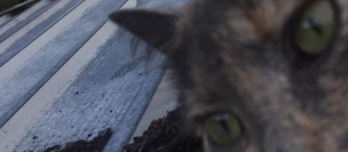 Grey Cat Selfie on Shed Roof - source Facebook
