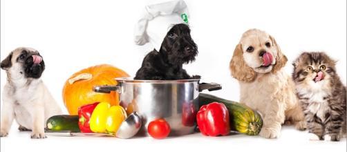 A alimentação natural além de trazer muitos beneficio para a saúde são deliciosas ao paladar do seu pet
