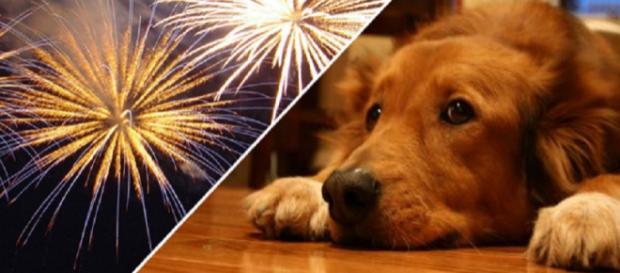 Lei que só permite fogos de artifício silenciosos beneficia cães (Foto: Reprodução)