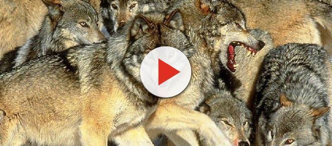 Resenha: 'Diga aos Lobos que estou em Casa'