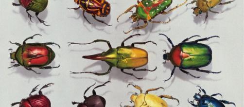 Los insectos faraónicos. - com.es