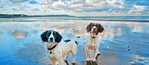 Dogs on a beach -- Ray Collister/Flickr