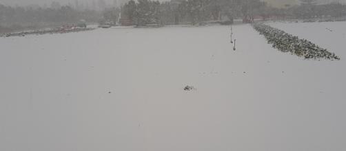 La neve che l'anno scorso ricoprì il Salento.