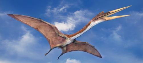Los dinosaurios más grandes - Biología - infobiologia.net