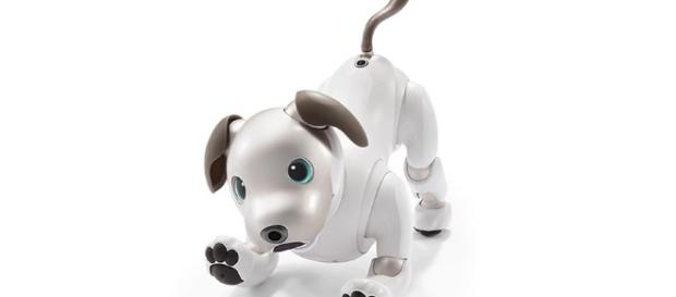 Aibo: The walking, talking and loving robot dog. - [Credit: Sony Product Release / With Approval]