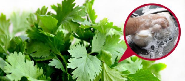 Para algumas pessoas, coentro tem gosto de sabão (Foto: Pixabay)