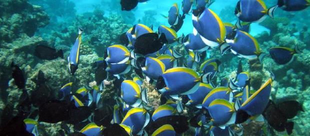 """Un estudio indica que los peces """"tienen amigos"""". - lareserva.com"""