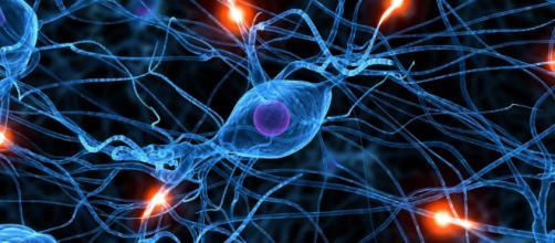 Cerebros más creativos son más capaces de activar algunas regiones cerebrales en comparación con otros cerebros que no lo son